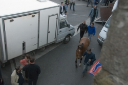 06. Last Horse