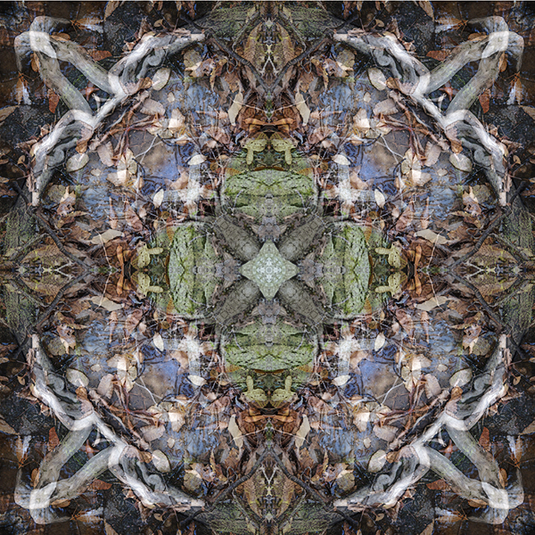 Joanna Gabler, Roots 2, 2013. Archival pigment print.